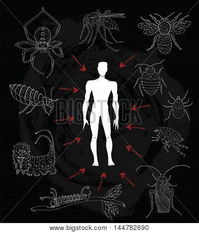 Poster with human silhouette and dangerous insects or parasites. House fly, spider, cockroach, flea and bed bugs. Doodle line art illustration and graphic sketch