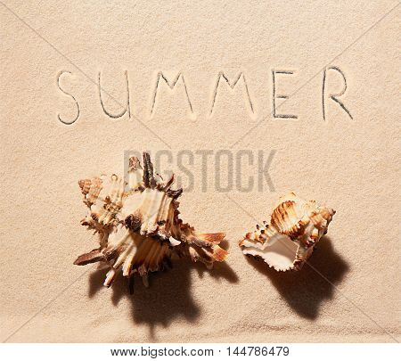 Two Sea Shells And Summer Lettering Drawn On Sand