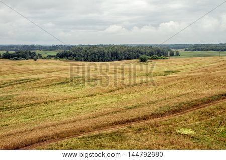 Lithuanian Wheat Field