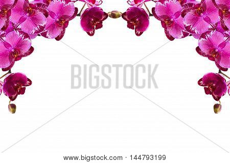 orchid branch with violet flowers isolated on white background