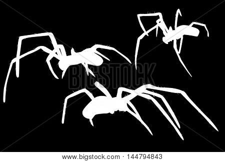 illustration with three spider silhouettes isolated on black background