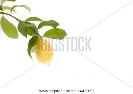 Solo Lemon