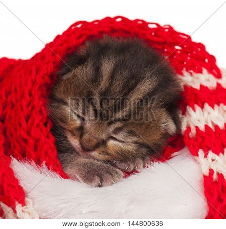 Cute little kitten wrapped up in a warm knitted scarf