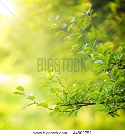 Green leaves on background of forest in a sunny day