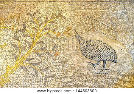 TABGHA ISRAEL - FEBRUARY 22 2016: The mosaic on the floor of Multiplication Church with the guineafowl next to the bush on February 22 in Tabgha.