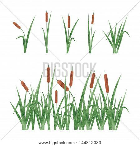 Watercolor reeds set. Design elements isolated on white background.