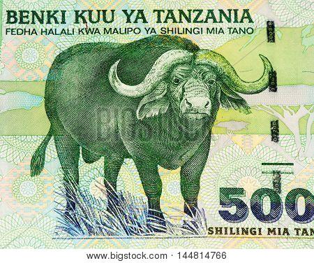 500 Tanzanian shillings bank note. Tanzanian shilling is the national currency of Tanzania