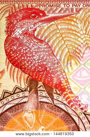5 Gambian dalasi bank note. Gambian dalasi is the national currency of Gambia poster