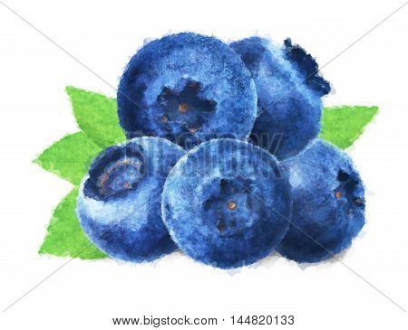 Juicy and fresh blueberries with green leaves on white background. Blue color blueberries close-up. Image of blueberries with high resolution. Watercolor aquarelle drawing sketch painting blueberry