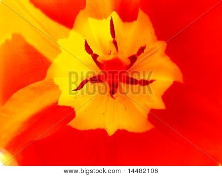 Red and yellow flower of dreams