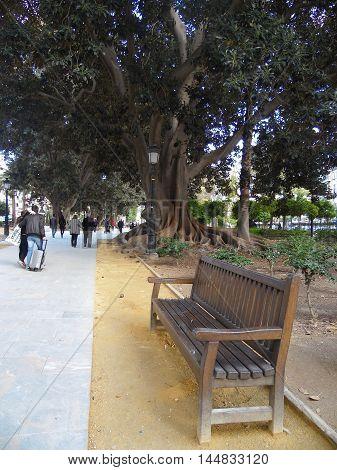 Parque de Murcia con ficus centenarios y paseos