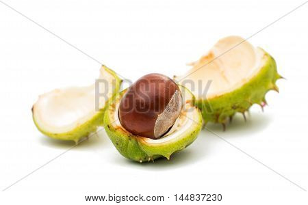 fruit chestnut nut-like, capsular on a white background