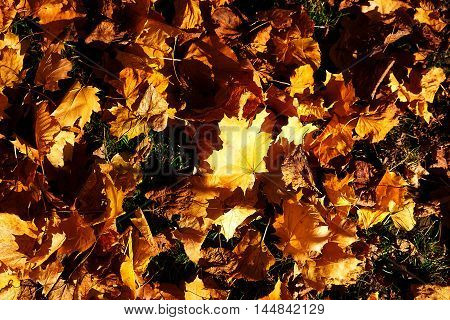 Green and Orange Autumn Leaves, color background