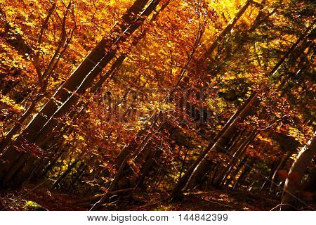 Forest in the autumn, beautiful color autumn foresr