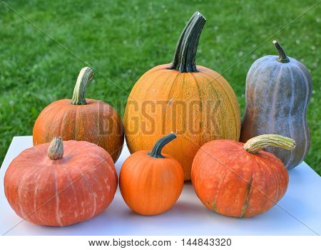 Pumpkins and squashes on grass. Fresh harvest