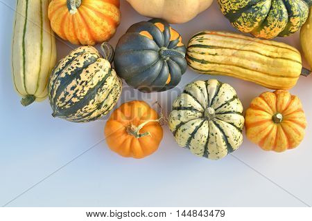 Winter squash autumn collection fresh harvest. Different varieties