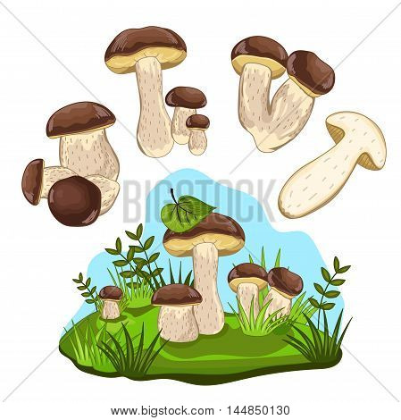 Porcini mushroom set isolated on white background. Isolated porcini mushroom. Cartoon cep. Vector mushroom champignon. Porcini in forest landscape. Autumn forest mushroom. Half porcini. Cep mushroom. Cartoon Mushroom.
