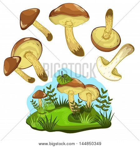 Greasers mushroom set on white background. Vector greasers mushroom. Cartoon greasers mushroom. Isolated greasers mushroom. Cartoon mushroom. Vector mushroom.