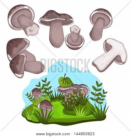 Mushroom isolated on white background. Vector mushroom and forest mushroom set. Different mushroom size. Half mushroom and small mushroom collection. Vegetarian food. Raw mushroom. Autumn mushroom Cartoon mushroom illustration.