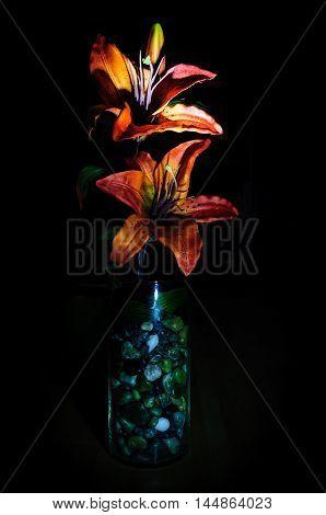 Dark Tiger Lilly In Glass Vase On A Black Background