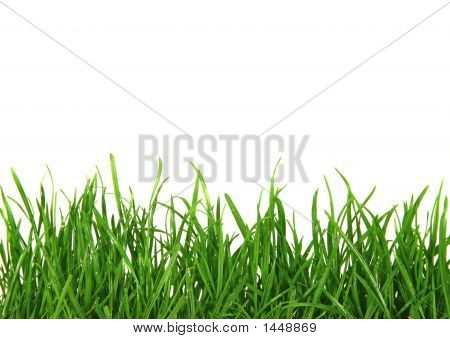 Midlevel view of Grass Background Isolated on White Background poster