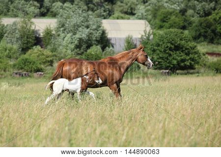 Mare With A Foal Running