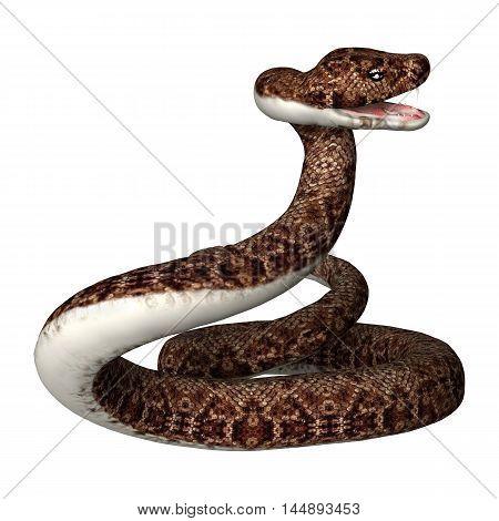 3D Rendering Rattlesnake On White