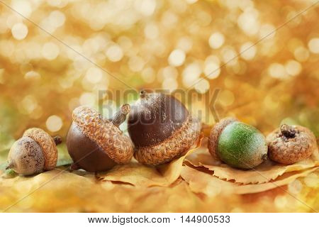 Autumn background with acorns, leaves and fantastic bokeh with copy space for your text, selective focus.