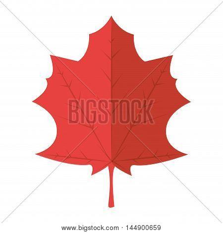 maple leaf natural autumn dry plant ecology sheet foliage enviroment vector illustration