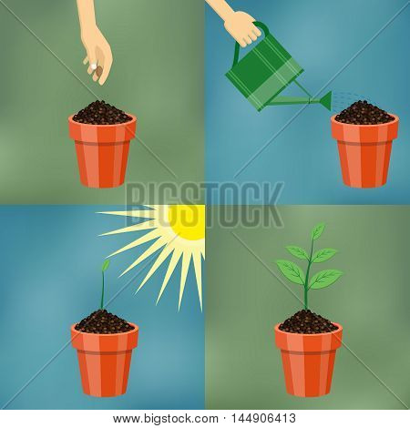 How to grow tree from the seed in the pot easy step by step. Design of garden elements.