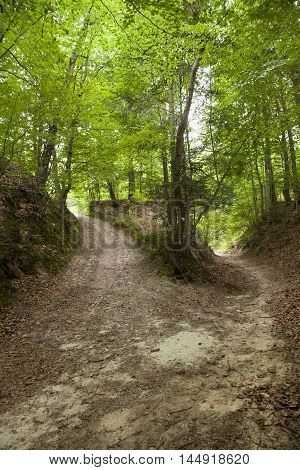 Loess Ravine In Roztocze, Poland