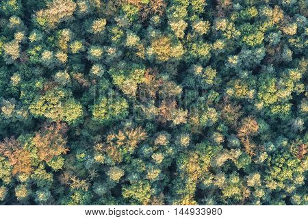 aerial view of trees in a continental forest