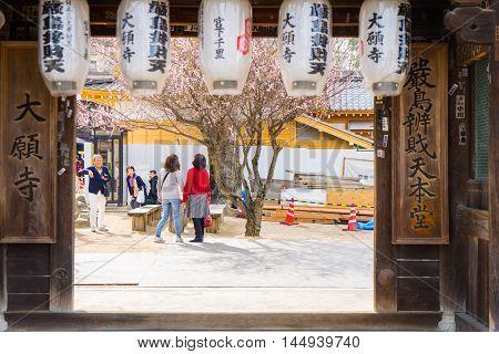 Hiroshima, Japan - March 16, 2016: Miyajima on March 16, 2016. Tourists are looking at Sakura tree in Itsukushima Shrine.