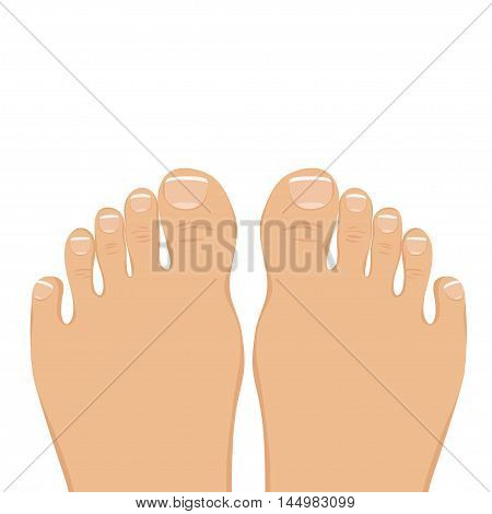 Vector illustration of a woman barefoot. Top view. The feet with a neat pedicure isolated on white.
