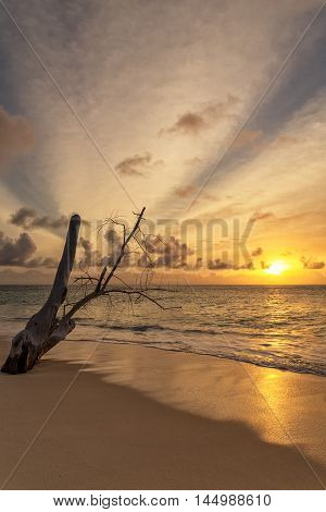 Old tree trunk on the beach with dreamy scenic sunset sky background