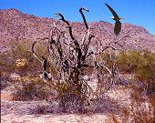 Illustrated bald eagle flying in the desert poster