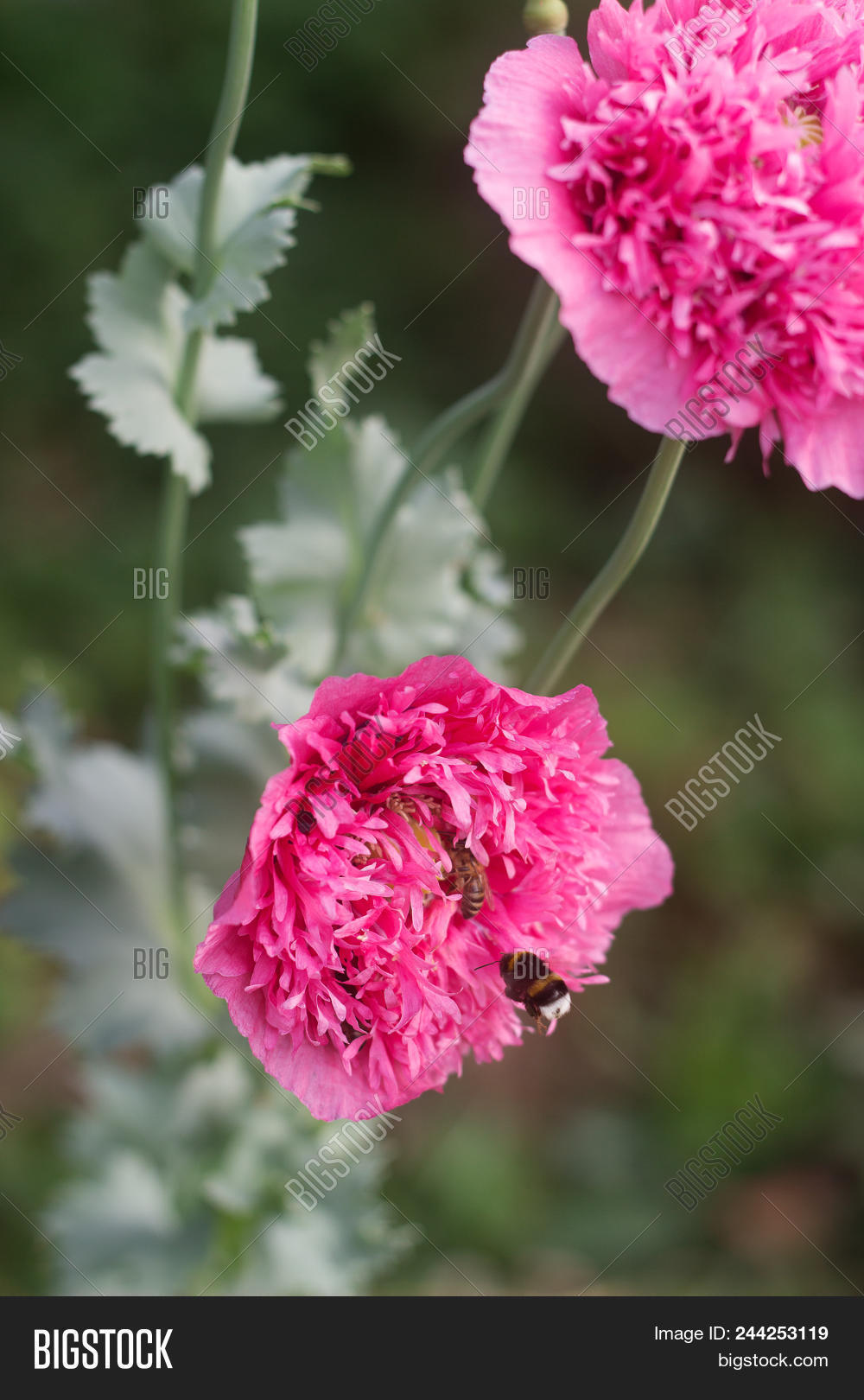 Flowers Unusual Double Image Photo Free Trial Bigstock