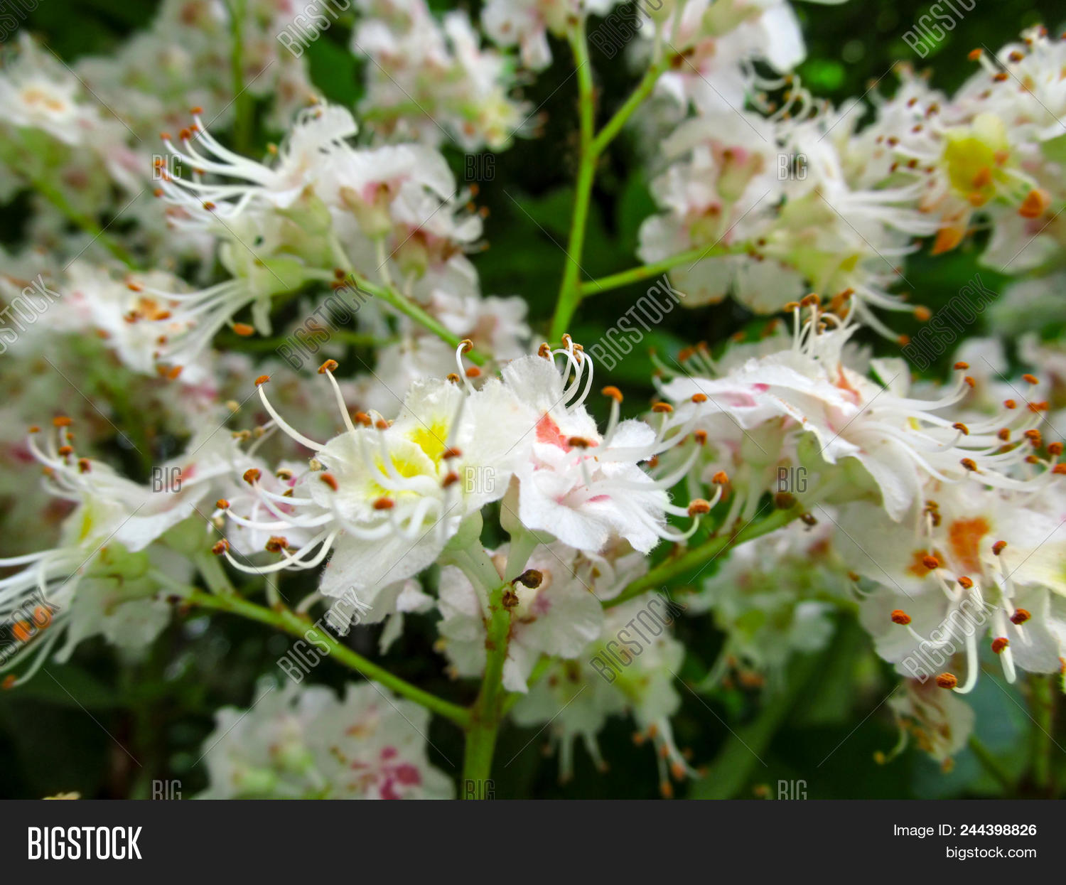 Delicate Floral Image Photo Free Trial Bigstock