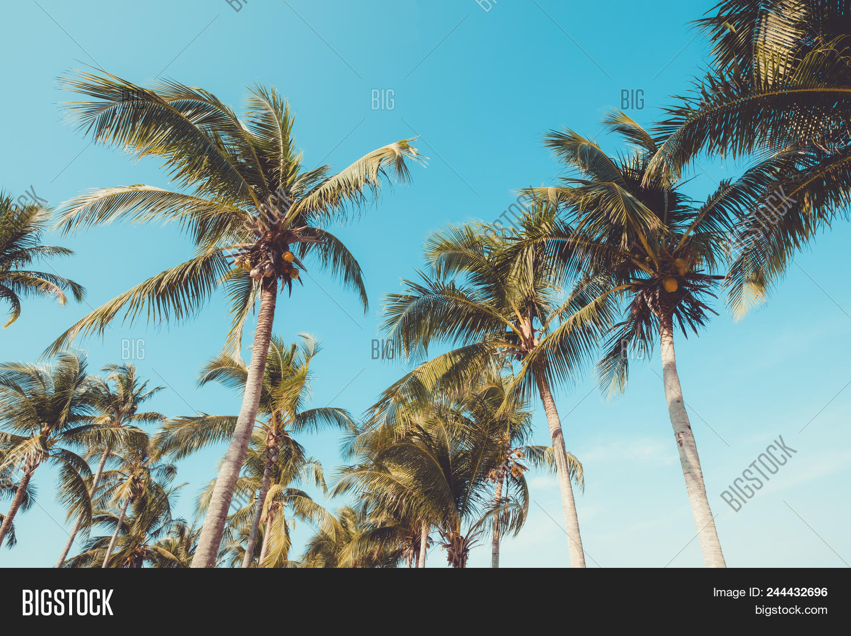 Palm Tree On Tropical Image & Photo (Free Trial) | Bigstock