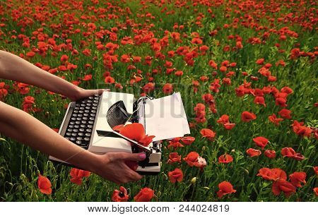Journalism And Writing Summer. Opium Poppy, Agile Business, Ecology. Drug, Narcotics, Opium, Novel.