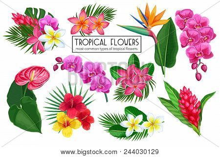 Vector Set Tropical Flowers. Jungle Exotic Strelitzia, Anthurium, Hibiscus, Plumeria, Orchid And Gin