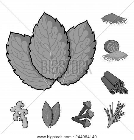 Herb And Spices Monochrome Icons In Set Collection For Design.different Kinds Of Seasonings Vector S