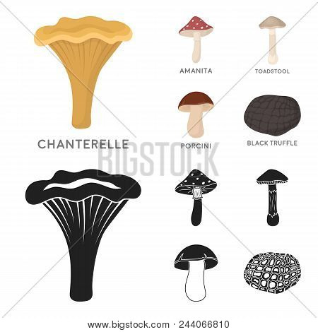 Amanita, Porcini, Black Truffle, Toadstool. Set Collection Icons In Cartoon, Black Style Vector Symb