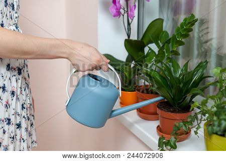 The Girl Florist Watered The House Plants From The Watering Can. On The Window-sill Is A Pot Of Orch