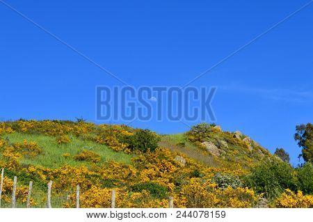 Typical Background Of Maquis Shrubland, Wild Nature, Mediterranean Region, Sicily, Italy, Europe
