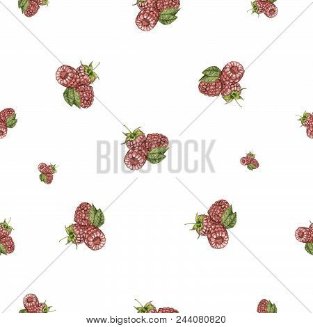 Watercolor Hand Drawn Raspberry Seamless Pattern. Painted Isolated Raspberry Set Illustration On Whi