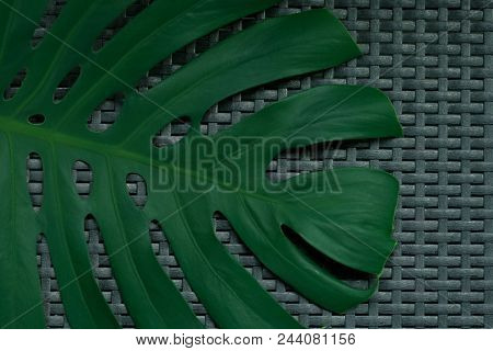 Monstera leaf on a dark txtured background with a color shift, product placement ready