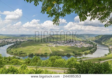 Moselle Loop At Trittenheim Panorama Germany Picture
