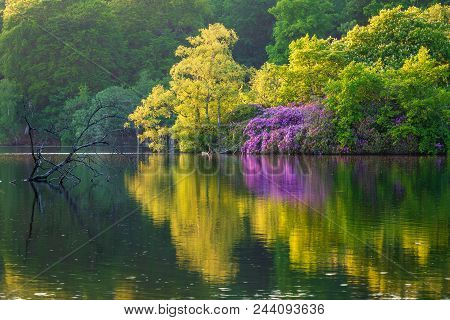 Early Summer At Bolam Lake Country Park, Located In The Beautiful Northumberland Countryside, It Is