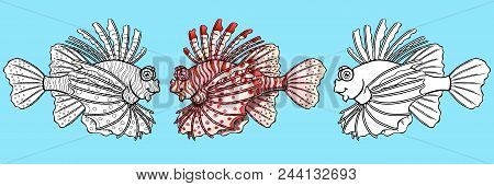 Set Friendly Lionfish, The Colorful And Black Planimetric Drawing Separately On A Blue Background. P